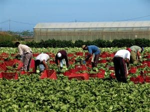 Farmworkers Ask Wendy's to Act on Sexual Abuse in the Fields